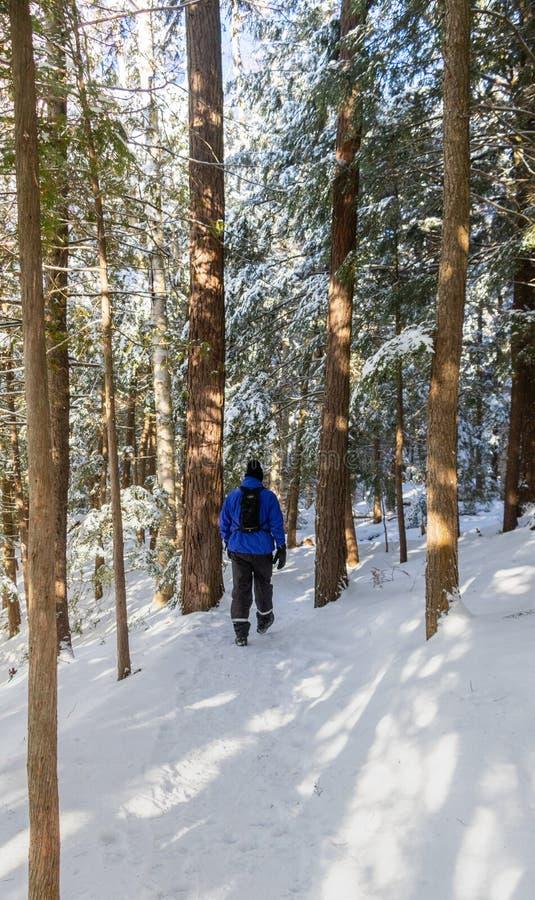 Рай Snowy в Muskoka стоковые изображения