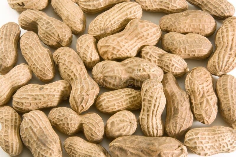 раковина арахисов стоковое фото rf