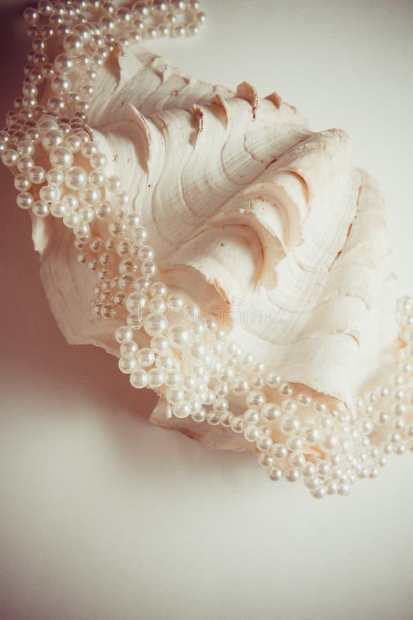Раковина жемчуга стоковая фотография