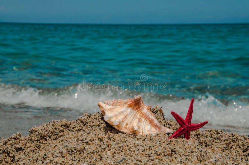 Раковина и морские звёзды на песке стоковое изображение rf