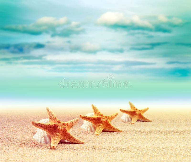 Раковина и морские звёзды на песчаном пляже стоковое изображение