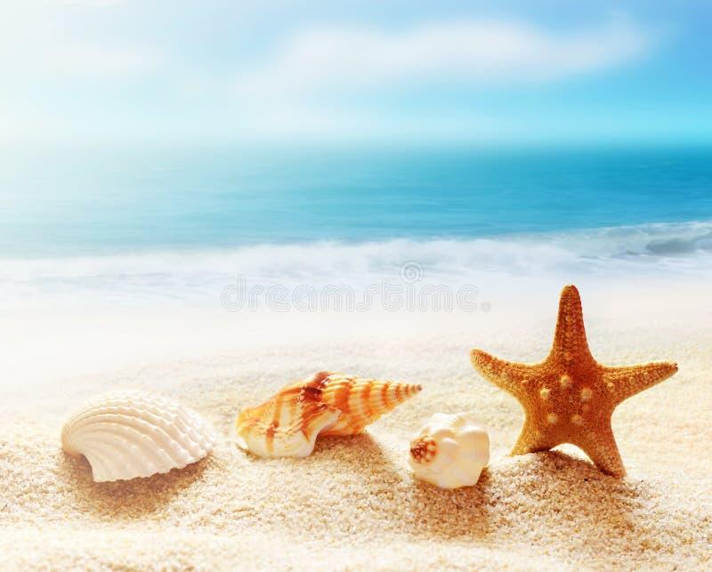 Раковина и морские звёзды на песчаном пляже стоковые изображения rf