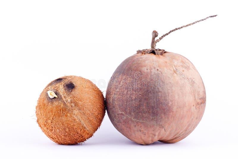 Раковина кокоса и коричневый зрелый кокос для молока кокоса или кокоса масла на изолированной еде плодоовощ белой предпосылки здо стоковая фотография rf
