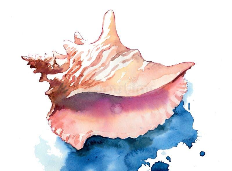 Раковина моря акварели иллюстрация вектора