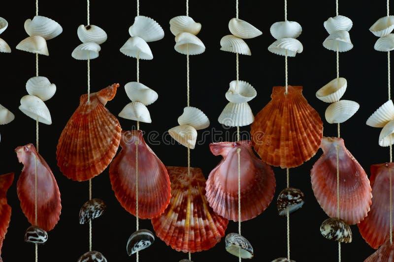 раковина моря декора стоковая фотография rf