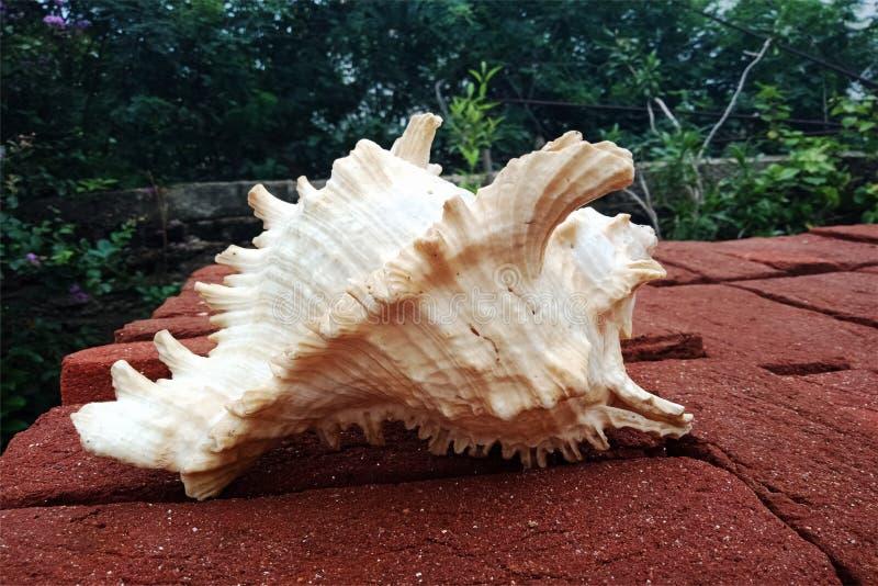Раковина моря на кирпиче предпосылка, обои стоковые фото