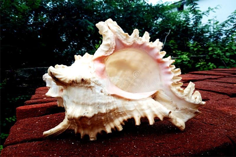 Раковина моря на кирпиче предпосылка, обои стоковое фото rf