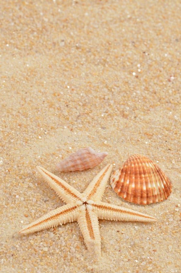Раковина моря на песке стоковая фотография rf