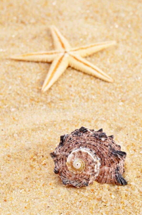 Раковина моря на песке стоковое фото rf