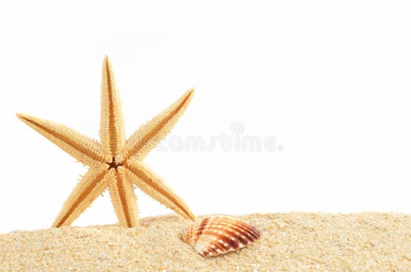 Раковина моря на песке стоковые фотографии rf