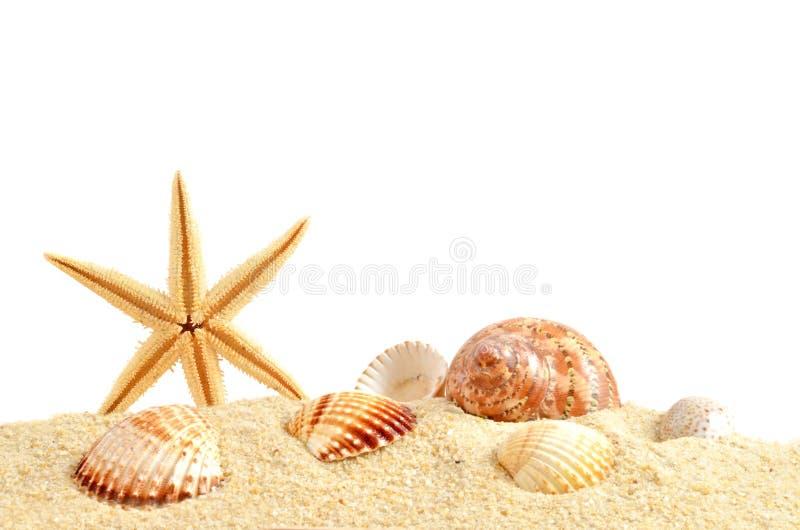Раковина моря на песке стоковое фото