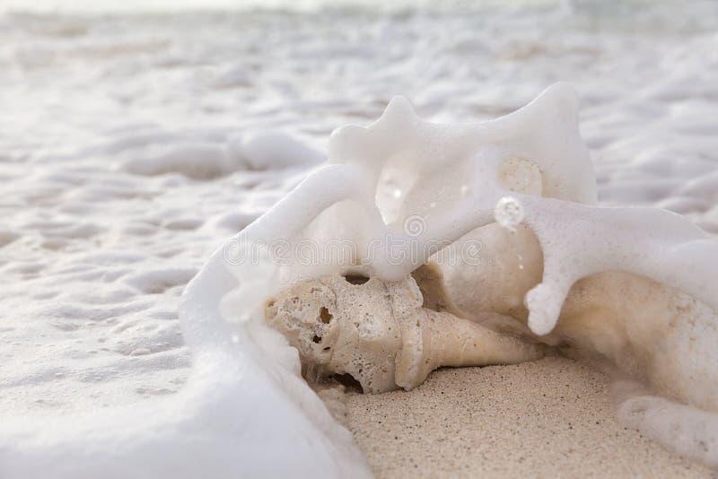 Раковина моря на песчаном пляже на восходе солнца летом стоковая фотография
