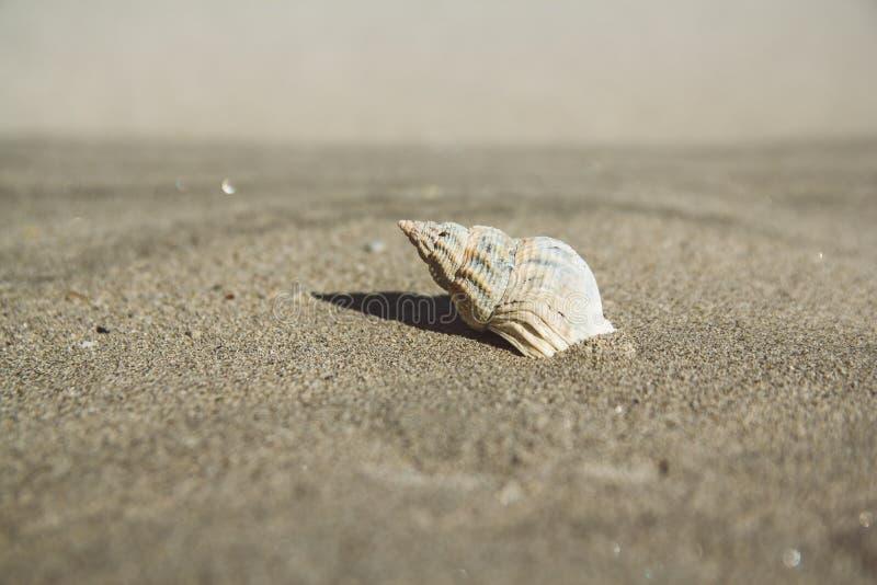 Раковина моря на песчаном пляже r r Смогите использовать как знамя стоковое изображение