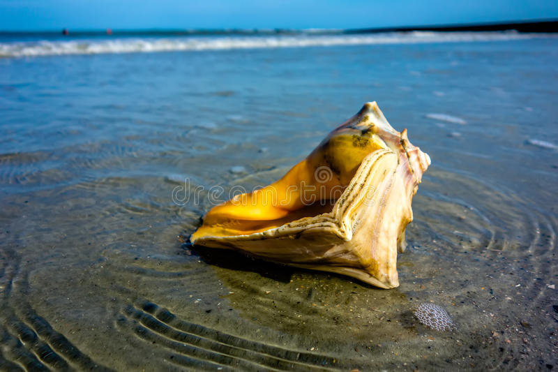 Раковина моря на пляже Атлантического океана на заходе солнца стоковое фото rf