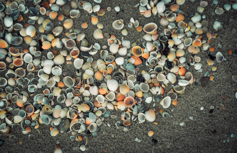 раковина моря песка поля глубины отмелая стоковое изображение