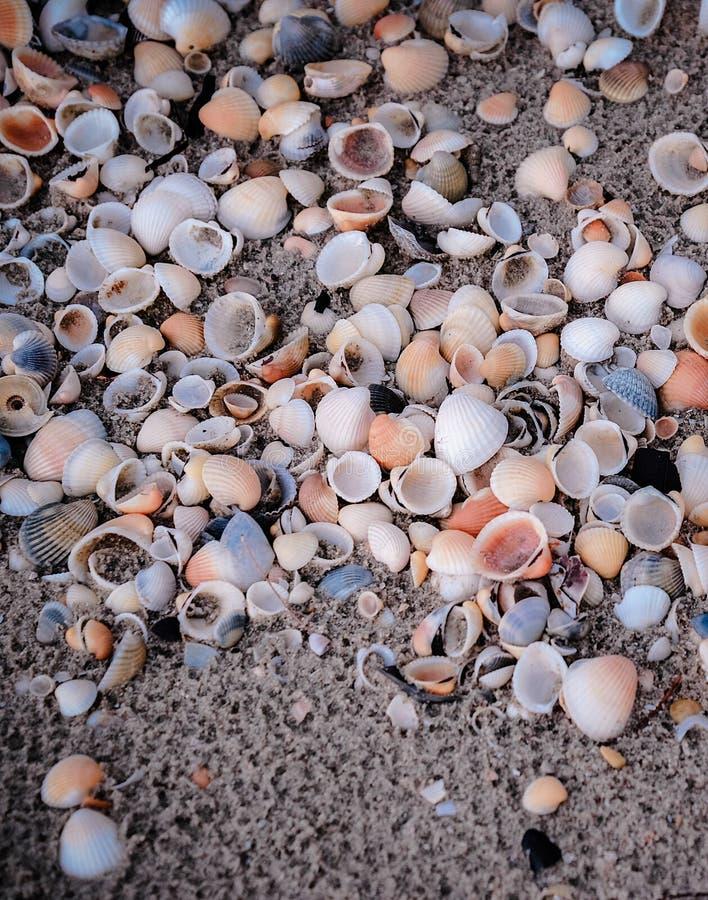 раковина моря песка поля глубины отмелая стоковые фотографии rf