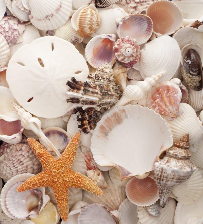 раковина моря предпосылки стоковые фотографии rf