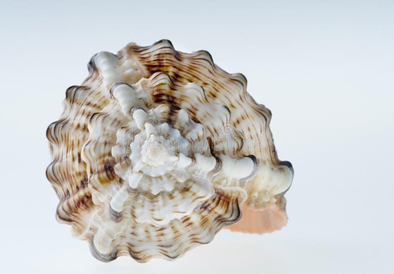 раковина моря стоковое изображение