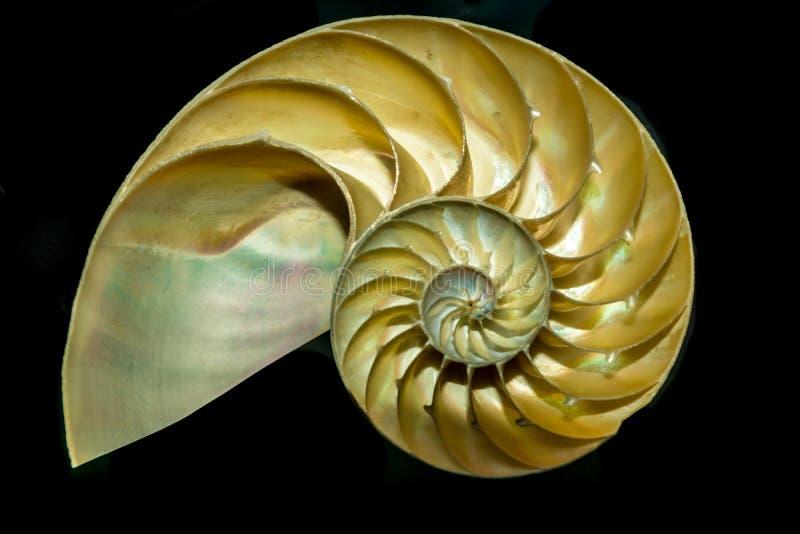 Раковина моря Nautilus Cutaway стоковые фотографии rf
