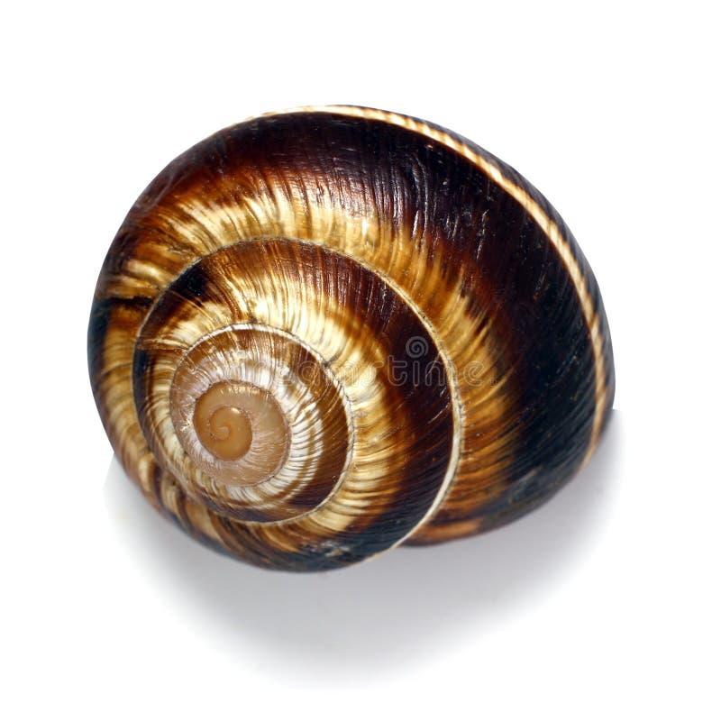 Раковина на белой предпосылке, винтовой линии pomatia улитка также римская, бургундская улитка, съестная улитка или escargot, вид стоковые фотографии rf