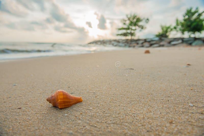 Раковина на пляже стоковые фотографии rf