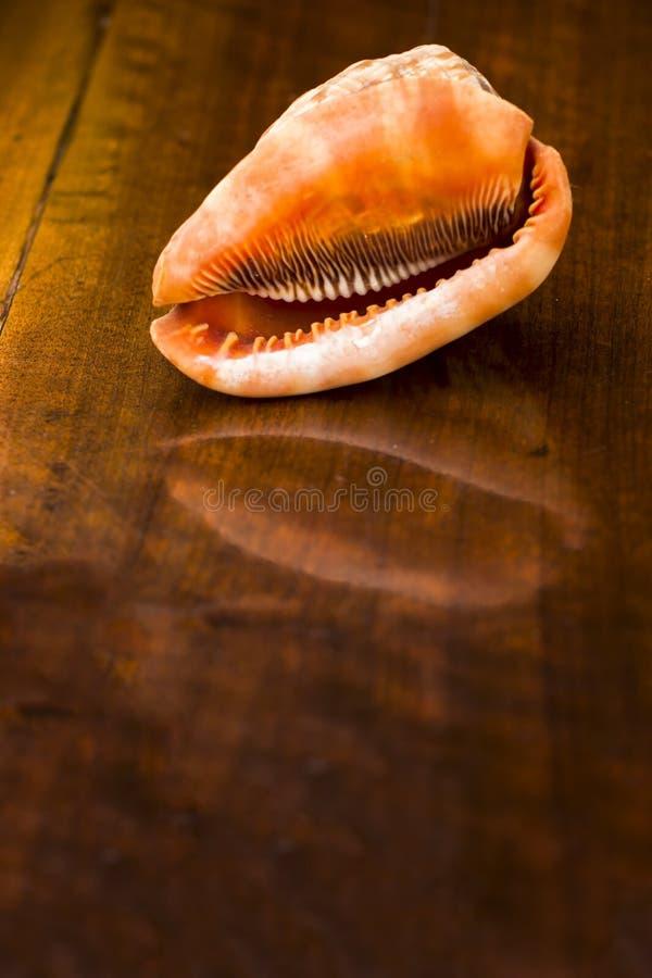 Download Раковина на старом деревянном столе. Внутри помещения Стоковое Изображение - изображение насчитывающей конструкция, indoors: 33728133