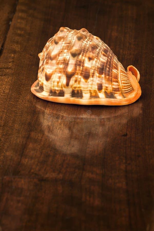Download Раковина на старом деревянном столе. Внутри помещения Стоковое Изображение - изображение насчитывающей aquatics, таблица: 33728251