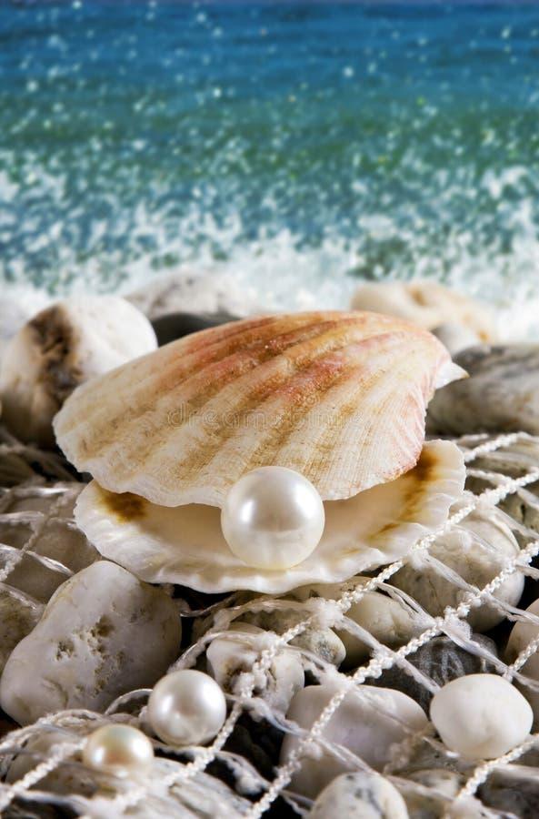 раковина перлы стоковое изображение rf