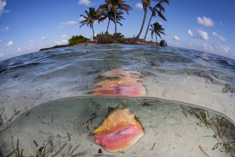 Раковина раковины ферзя и тропический остров стоковое фото