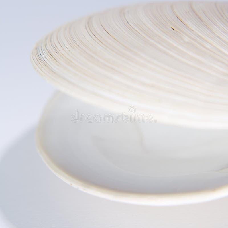 раковина clam открытая стоковые фото