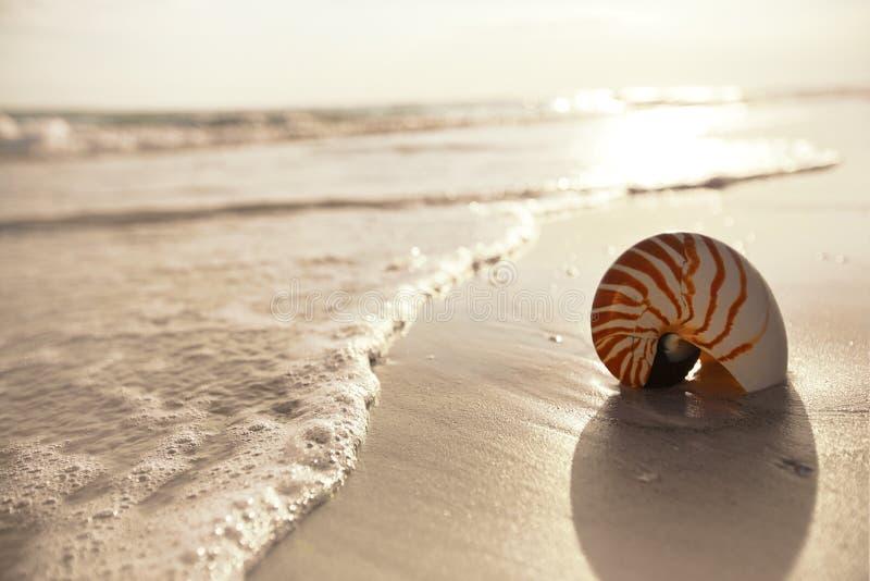 Раковина Nautilus на песке пляжа океана моря стоковое фото