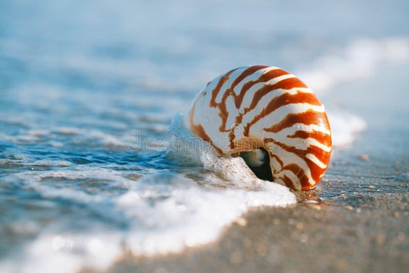 Раковина Nautilus с волной моря, пляжем Флориды под ligh солнца стоковая фотография rf