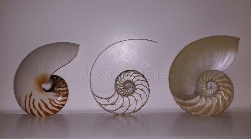 Раковина Nautilus, то ` s как она смотрит на внутренности стоковые изображения