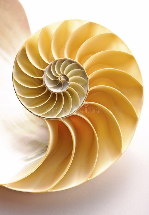 раковина nautilus стоковое изображение