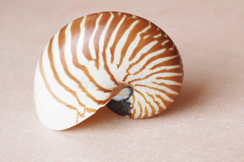 раковина nautilus стоковая фотография rf