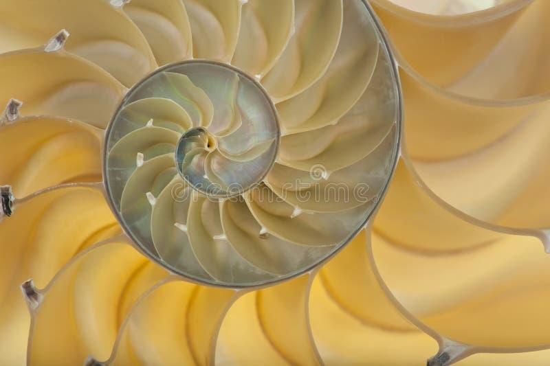 раковина nautilus стоковые изображения