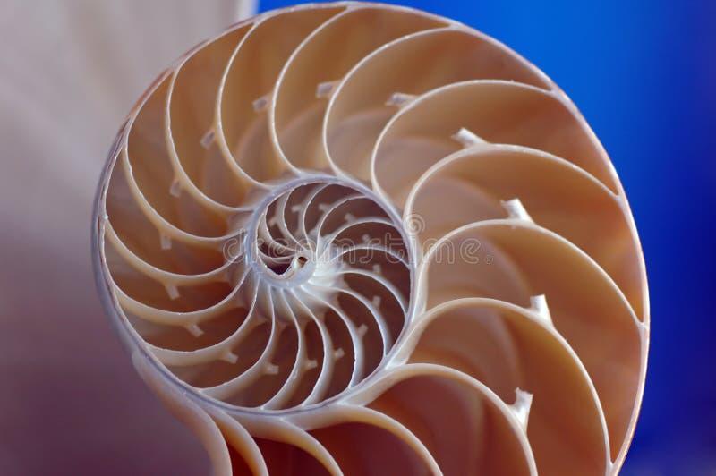 раковина nautilus стоковые фото