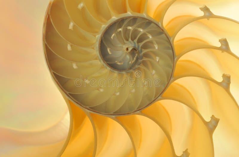 раковина nautilus стоковое изображение rf