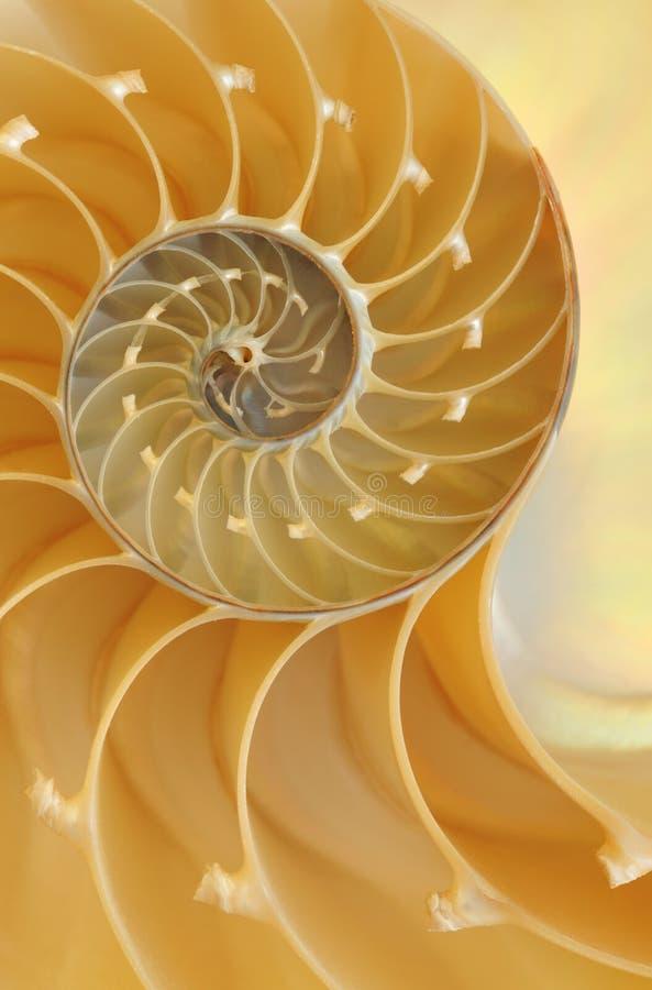 раковина nautilus стоковые изображения rf