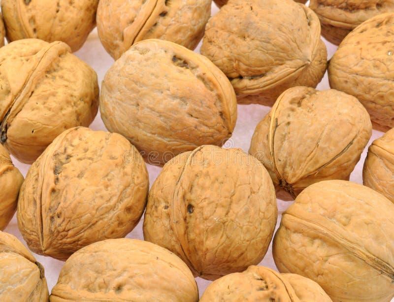 Раковины грецкого ореха стоковая фотография rf