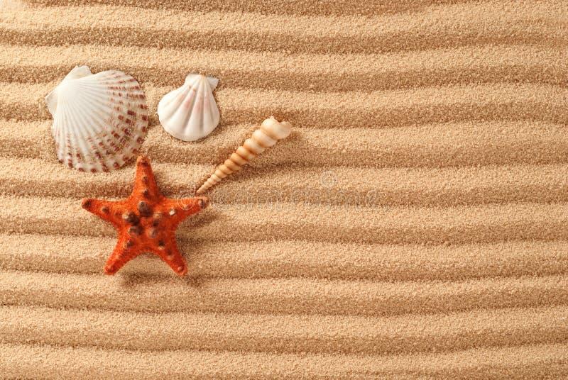 Раковины и морские звёзды на белом песке стоковая фотография rf