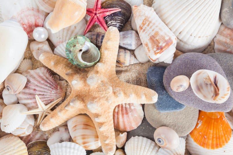 Раковины и морские звёзды на песчаном пляже Предпосылка лета Лето co стоковые изображения