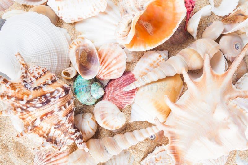 Раковины и морские звёзды на песчаном пляже Предпосылка лета Лето co стоковое фото rf