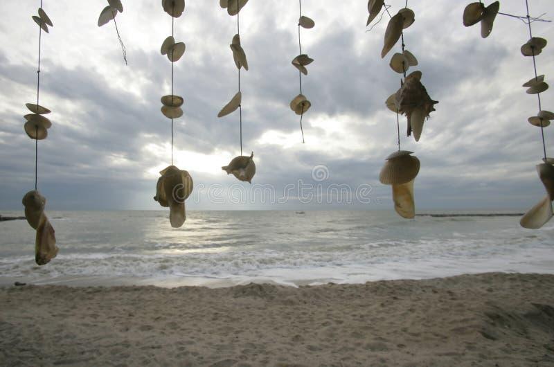 раковины летания стоковая фотография rf