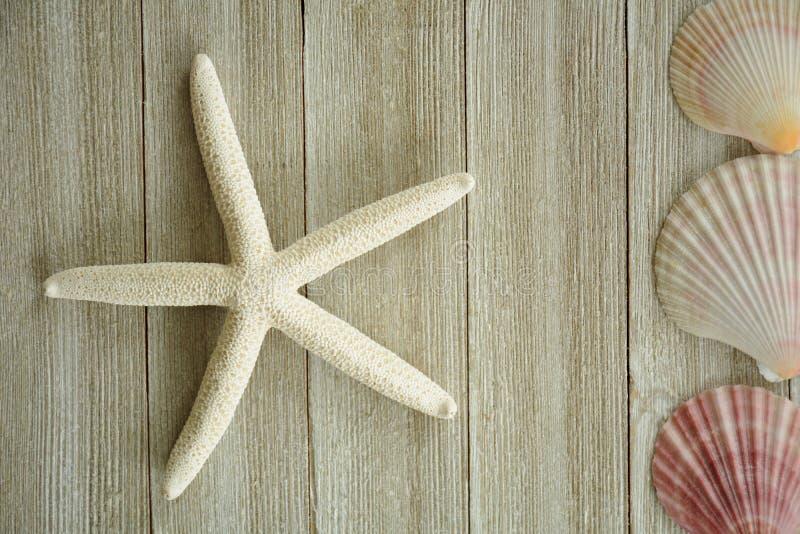 Раковины морских звёзд и scallop стоковая фотография rf