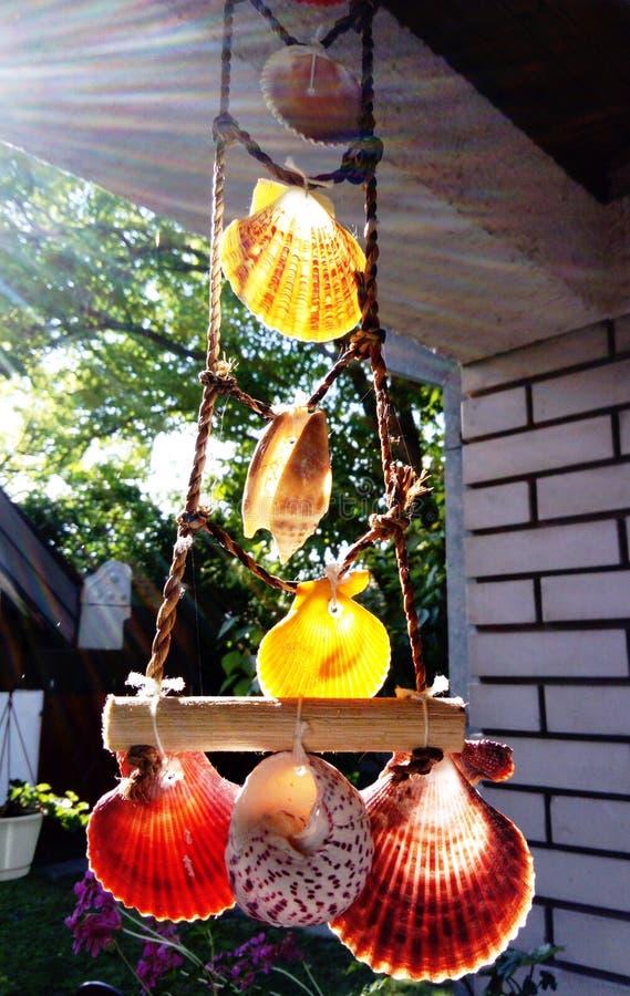 Раковины моря вися в солнце стоковое фото