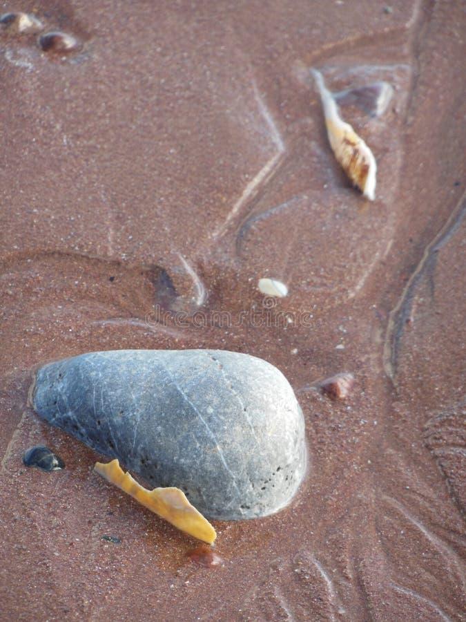 Раковины моря и голубой утес на песке стоковое изображение rf
