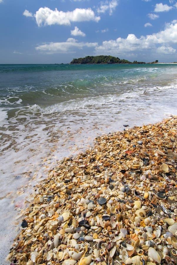 Download Раковины моря на главном пляже, Mt Maunganui, заливе множества, северном острове, Новой Зеландии Стоковое Изображение - изображение насчитывающей гора, небо: 33731599