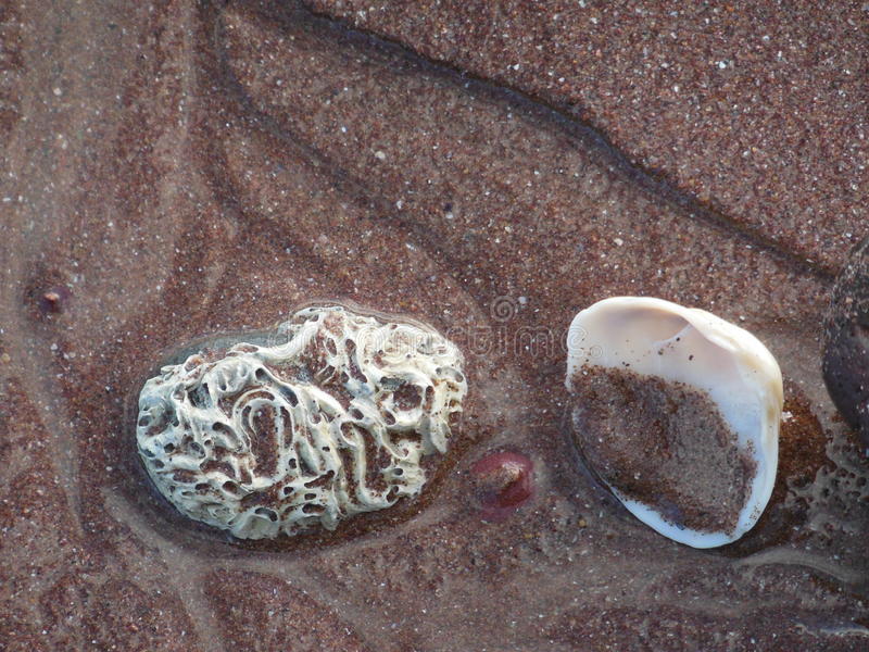 Раковины моря на песке стоковая фотография