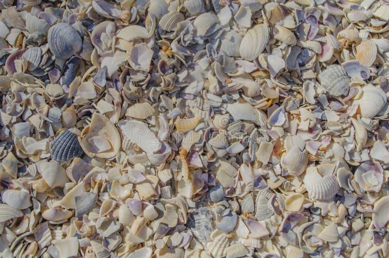 Раковины моря на пляже песка стоковое изображение rf